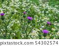 여름 꽃 엉겅퀴 54302574