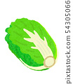 Chinese cabbage 54305066
