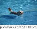 수영 개 54310125