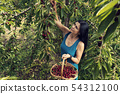 Beautiful young woman in the orchard  54312100
