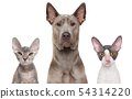 Close-up of a cats and dog 54314220
