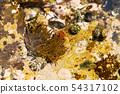 Sea anemones 54317102