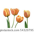 Set of tulip flowers with green leaf  54320795