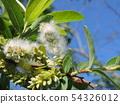 Salix Integra 54326012