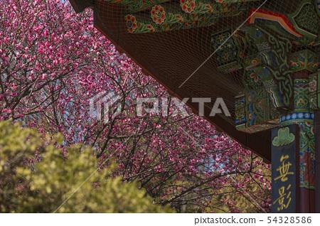 봉은사,삼성동,강남구,서울  54328586
