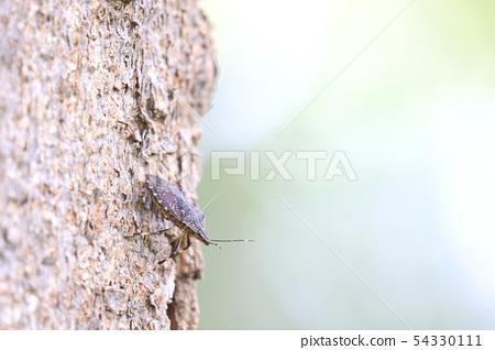 나무 줄기에 있던 노린재 54330111