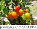 富有成效的番茄 54343954