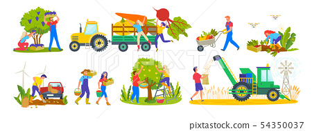 Harvesting Season Tractor and Agriculture Workers 54350037