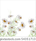 Bouquet of daisies on a white background. 54351713