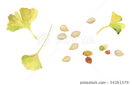 Gin wow ginkgo leaves watercolor 54361379