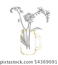 Forget-me-not flowers. Botanical illustration. Good for cosmetics, medicine, treating, aromatherapy 54369091