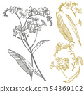 Forget-me-not flowers. Botanical illustration. Good for cosmetics, medicine, treating, aromatherapy 54369102
