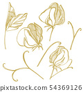 Sweet pea flowers drawing and sketch with line-art on white backgrounds. Floral pattern with flowers 54369126