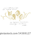 Sweet pea flowers drawing and sketch with line-art on white backgrounds. Botanical plant 54369127