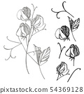 Sweet pea flowers drawing and sketch with line-art on white backgrounds. Floral pattern with flowers 54369128