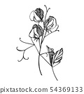 Sweet pea flowers drawing and sketch with line-art on white backgrounds. Floral pattern with flowers 54369133