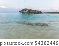 Stingrays swam to shore to enjoy a delicious meal 54382449