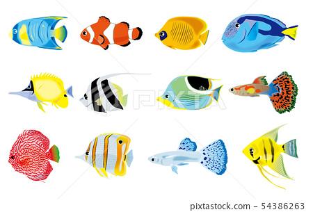 熱帶魚例證集合 54386263