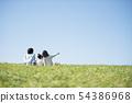 在家庭背后在草地上野餐 54386968