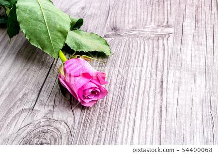 분홍색 장미 발렌타인  사랑 배경  54400068