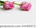 桃红色玫瑰华伦泰爱背景 54400072
