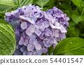 พืชไม้ดอกขนาดใหญ่ 54401547