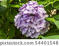 พืชไม้ดอกขนาดใหญ่ 54401548