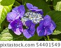 พืชไม้ดอกขนาดใหญ่ 54401549