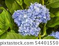 พืชไม้ดอกขนาดใหญ่ 54401550