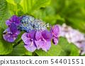 พืชไม้ดอกขนาดใหญ่ 54401551