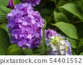 พืชไม้ดอกขนาดใหญ่ 54401552