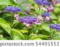 พืชไม้ดอกขนาดใหญ่ 54401553