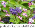 พืชไม้ดอกขนาดใหญ่ 54401554
