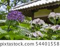 พืชไม้ดอกขนาดใหญ่ 54401558