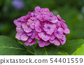 พืชไม้ดอกขนาดใหญ่ 54401559