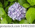พืชไม้ดอกขนาดใหญ่ 54401560