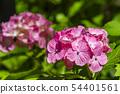 พืชไม้ดอกขนาดใหญ่ 54401561