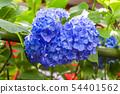 พืชไม้ดอกขนาดใหญ่ 54401562