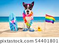 surfer dog beach 54401801