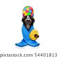 dog with a bathrobe  dressing gown 54401813