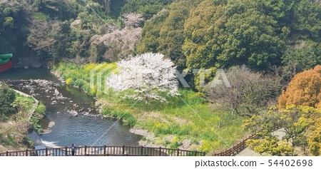 벚꽃 54402698