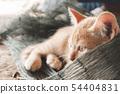 Cute little red kitten sleeping 54404831