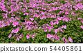<후나 바시 안데르센 공원> 봄의 꽃 54405861