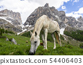 White horse on the background of the Marmolada 54406403