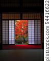 พฤศจิกายน Yunryu-in-Kyoto วัด Izuminji- 54416622