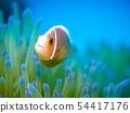 銀蓮花魚 54417176
