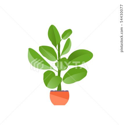 Houseplant ficus vector 54430077