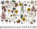 Vector set of hand drawn colored astilbe, craspedia, blue eryngo, lagurus, cotton, gypsophila 54432180