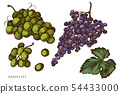 Vector set of hand drawn colored grapes 54433000