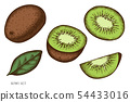 Vector set of hand drawn colored kiwi 54433016